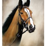 Kauto Star Head Study