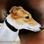 dGreyhound1