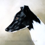 dgreyhound2