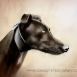 dgreyhound3