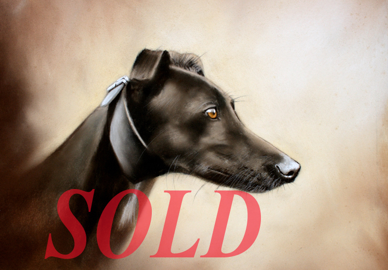 greyhound3WebSOLD